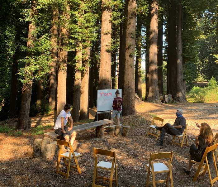 Employees at corporate event are brainstorming under redwood trees